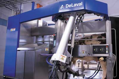 Dairy Automation and Robotic Milking Solutions