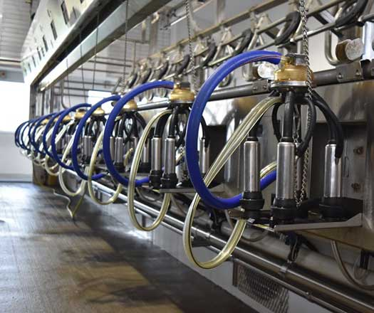 Dairy System Analysis